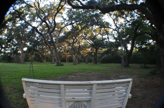 BlissWood Bed and Breakfast Ranch: backyard of our house