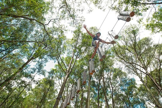 TreeTop Adventure Park Western Sydney: Experience nature from a different perspective