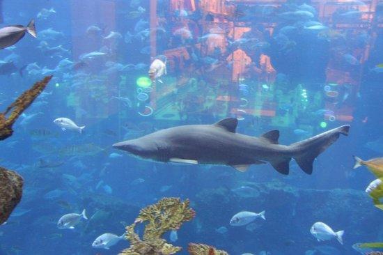 Dubai Aquarium & Underwater Zoo: рыбки