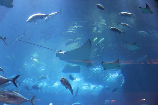 Dubai Aquarium & Underwater Zoo: скаты