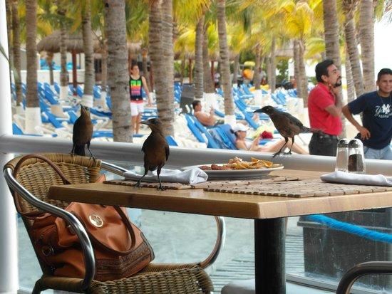 Barcelo Costa Cancun: Pajaritos visitantes