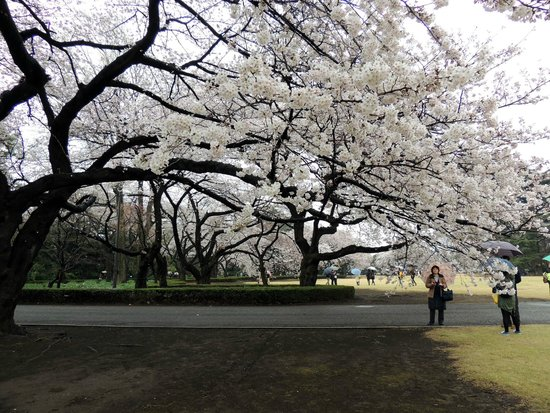 Shinjuku Gyoen National Garden : 新宿御苑