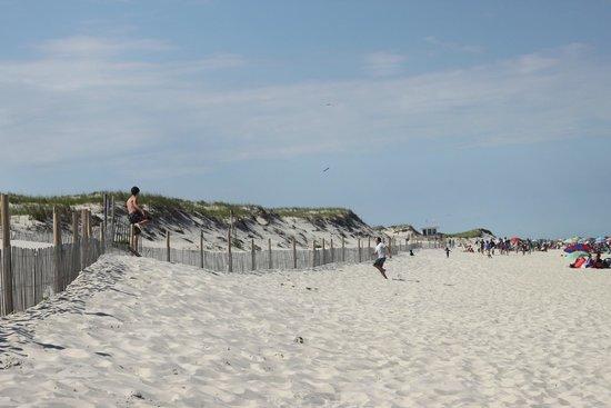 Island Beach State Park: dunes