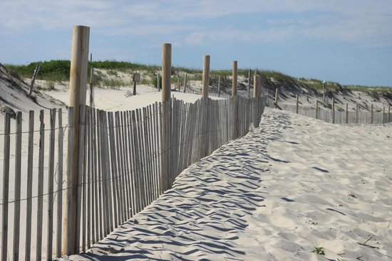 Island Beach State Park: reminder of montauk fences?