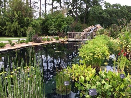 Water Garden At Coastal Ga Botanical Gardens Picture Of