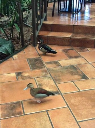 Embassy Suites by Hilton Memphis: cute little ducks