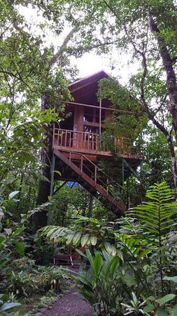 Tree Houses Hotel Costa Rica: Our fellow couple's tree house