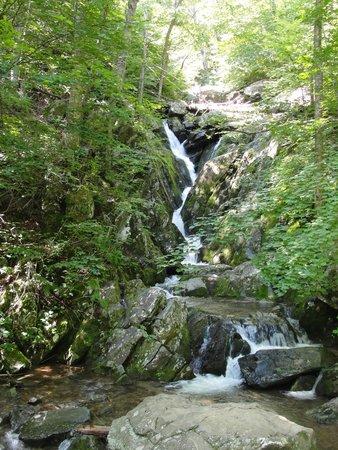 Lewis Mountain Cabins: Creek on hike