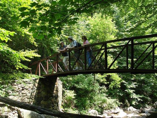 Lewis Mountain Cabins: Bridge over creek on hike