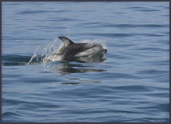 Seasmoke Whale Watching : great trip for photographers