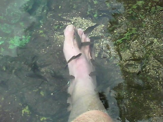 Dzibilchaltun Ruins: Pedicure in Cenote at Dzibilchaltun