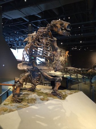 Natural History Museum of Utah: Giant sloth
