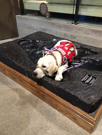 Natural History Museum of Utah: Service Dog Friendly