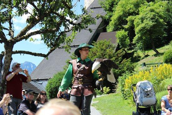 Erlebnisburg Hohenwerfen: falconry show