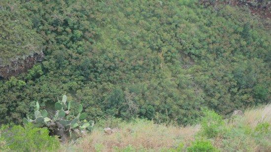 Skyline Eco-Adventures Zipline Tours : View from Mauna Kahalawai rest stop