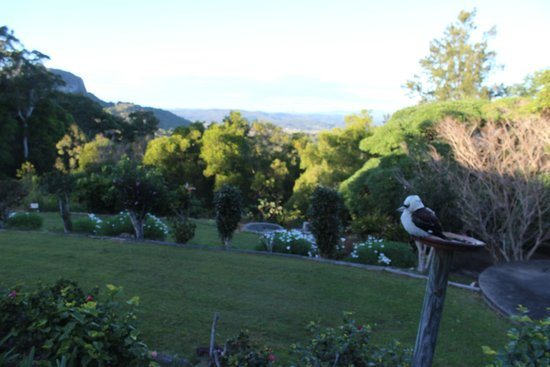 Ninderry Manor Luxury Retreat: The view from the room including Kookaburra