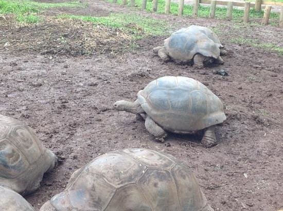 Seven Colored Earths: the tortoises were scratched and dirty compared to shiny ones at the botanical gardens