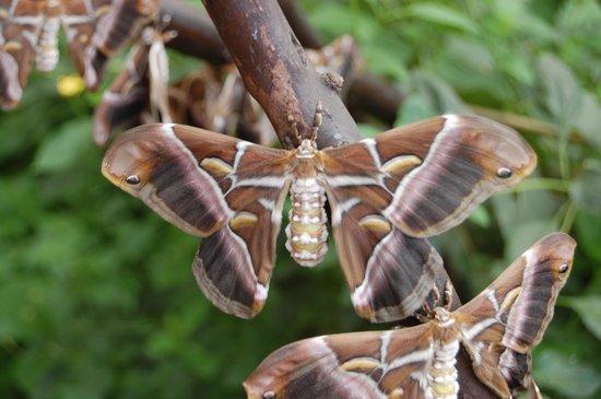 Mariposario de Benalmádena: Sleeping moth