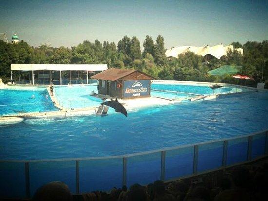 Zoomarine: delfini