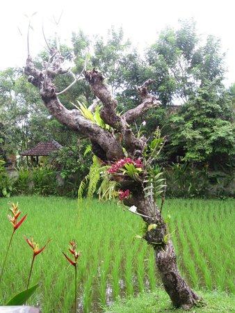Alam Shanti: hotel gardens