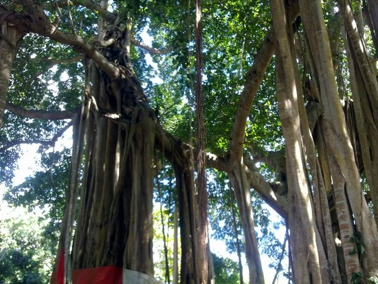 Hotel Kintana Resort & Spa : albero sacro