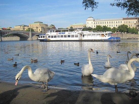 Hotel Atlantic : Лебеди в Праге