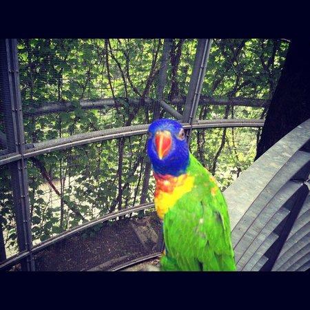 Trauttmansdorff Castle Gardens: pappagallo