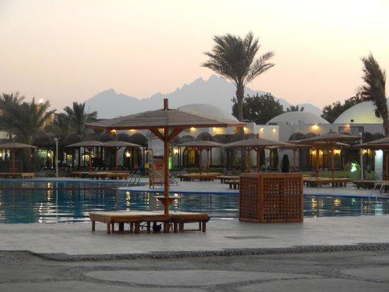 Desert Rose Resort: возле бассейна