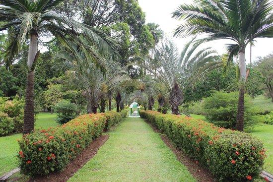 Botanical Gardens: the garden
