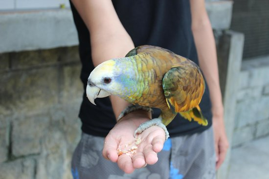Botanical Gardens: feeding the parrot
