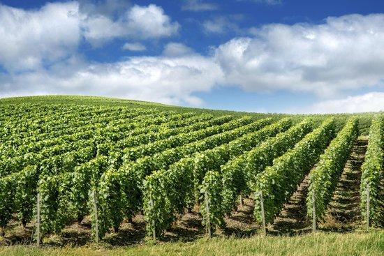 PARISCityVISION: Reims Champagne vineyards
