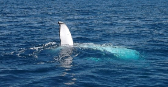 Freedom Whale Watch: If you are lucky one will wave to you.