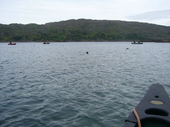 Wilderness Guides Day Tours: Surrounded by stealthy seals (Loch Moidart)