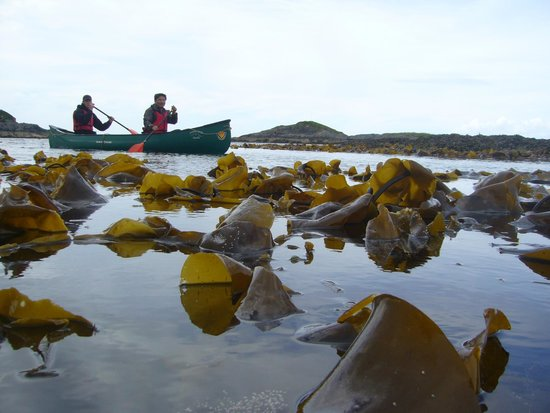 Wilderness Guides Day Tours: Above the kelp forest? (Loch Moidart)