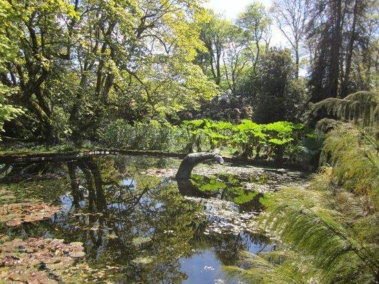 Trewidden Garden: Pond