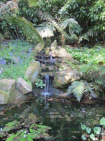 Trewidden Garden: Little waterfall