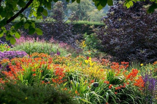 RHS Garden Rosemoor: The Hot Garden