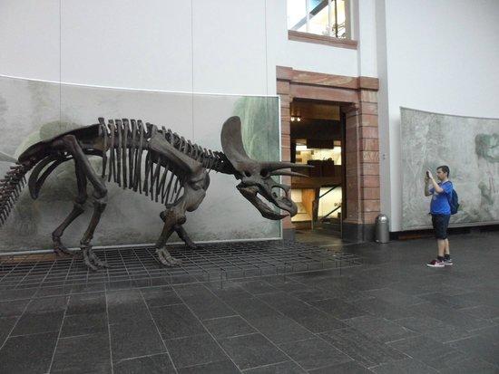 Naturmuseum Senckenberg: Triceratops