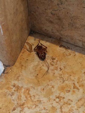 une blatte dans la chambre et pas que une photo de hotel rawabi marrakech spa marrakech. Black Bedroom Furniture Sets. Home Design Ideas