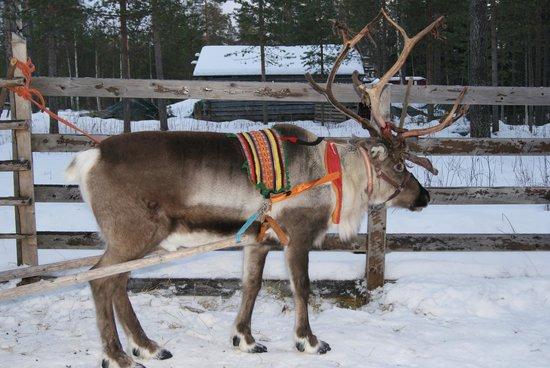 Santa Claus Holiday Village: renne