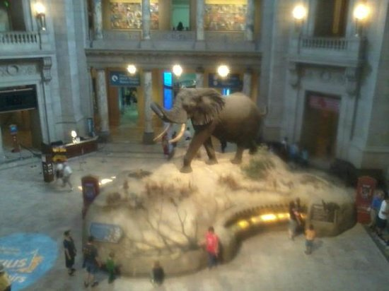 National Museum of Natural History : Rotunda area