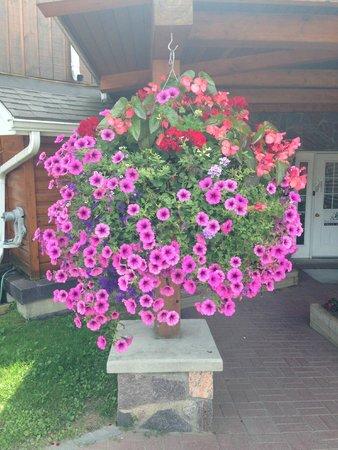 Couples Resort: HUGE Flower baskets