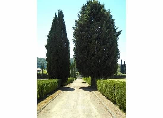 Villa Olmi Firenze : Trees on the property