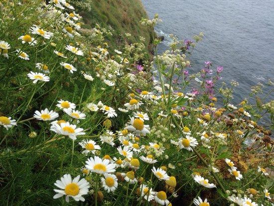 Santa Catalina Headland (Cerro de Santa Catalina): Flowers