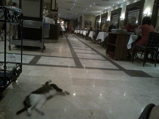 Paradise Friends Yali Hotel & Resort: gatto al ristorante