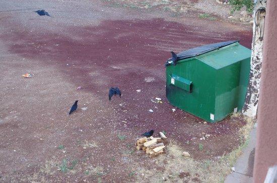 Canyon Plaza Resort: contenaire à ordures vu de la chambre 316