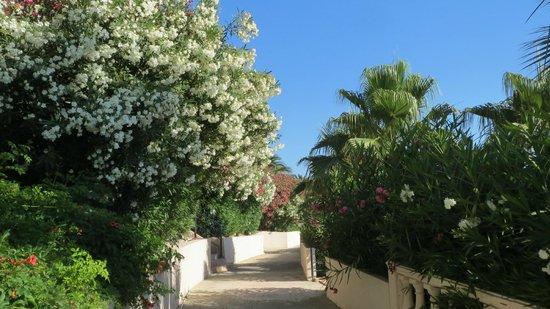 Grand Blue Sky International: Garden