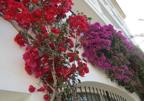Hotel JS Sol de Alcudia: Burgainvillae by the poolarea