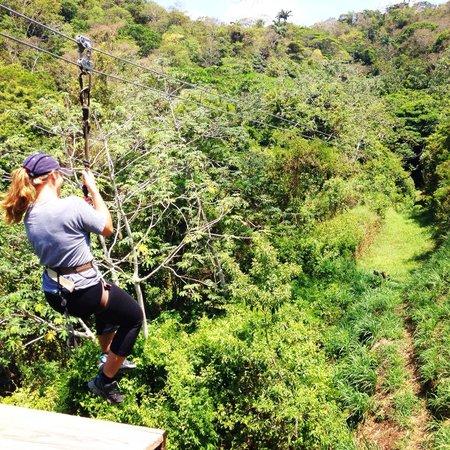 Jungle Top Zipline Adventure: FUN TIME