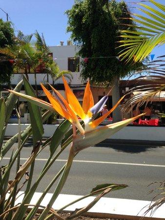 Hotel THe Corralejo Beach : Fleur
